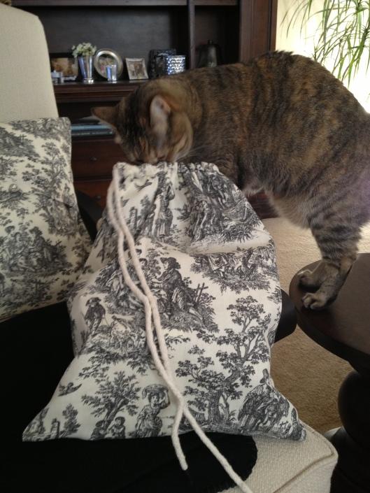 Kitty curiosity!